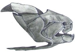 Dunkelosteus skull