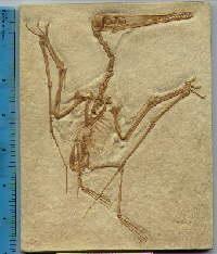 pterosaur image
