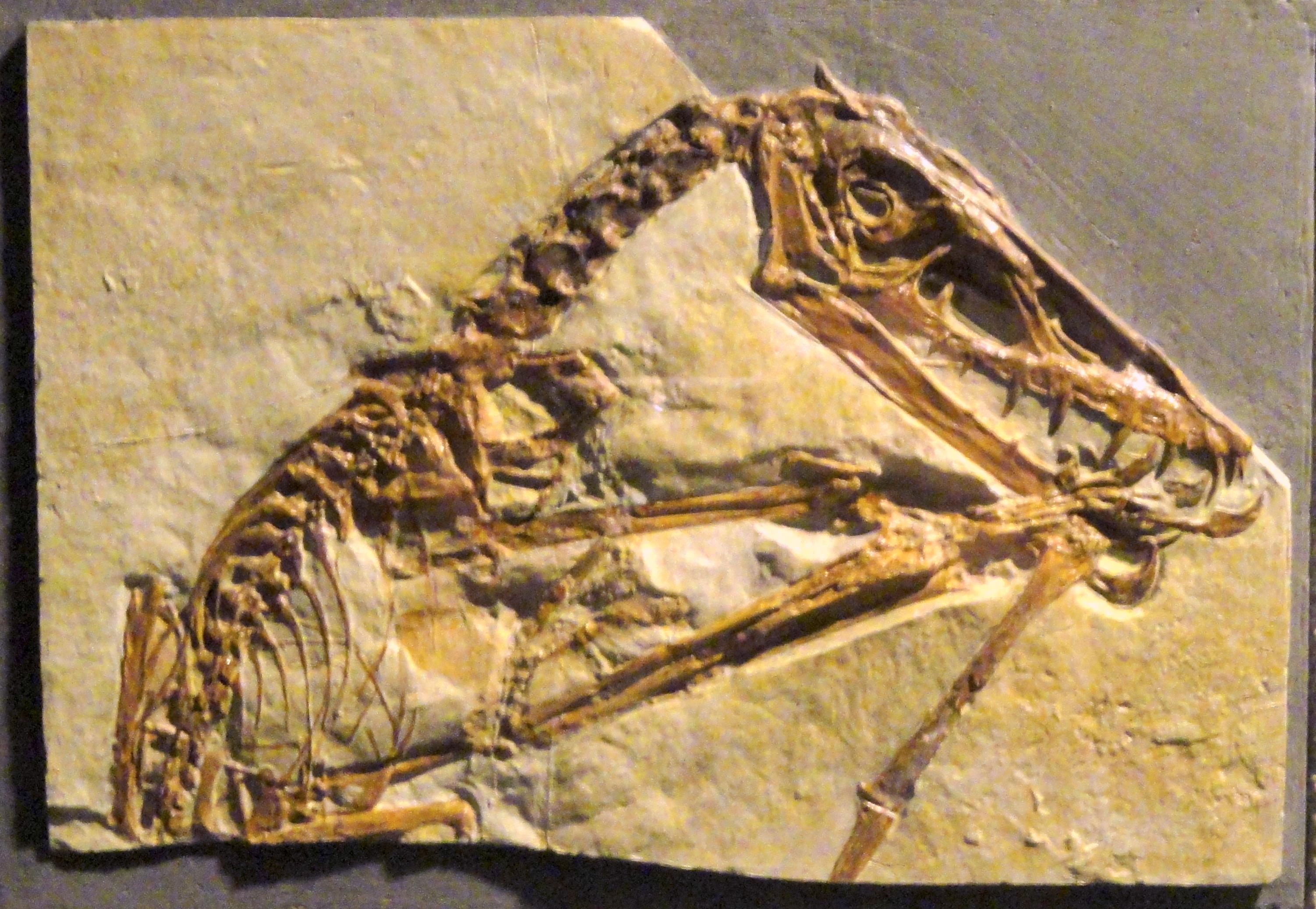 Pterorhynchus, no crest