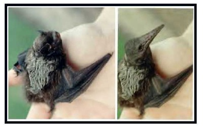Bat turned into a baby pterosaur