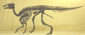 <I>Edmontosaurus</I> skeleton