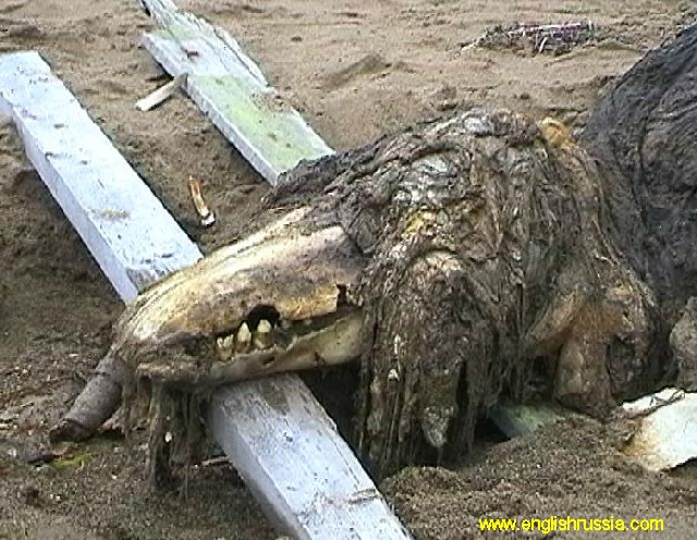 Russian carcass12