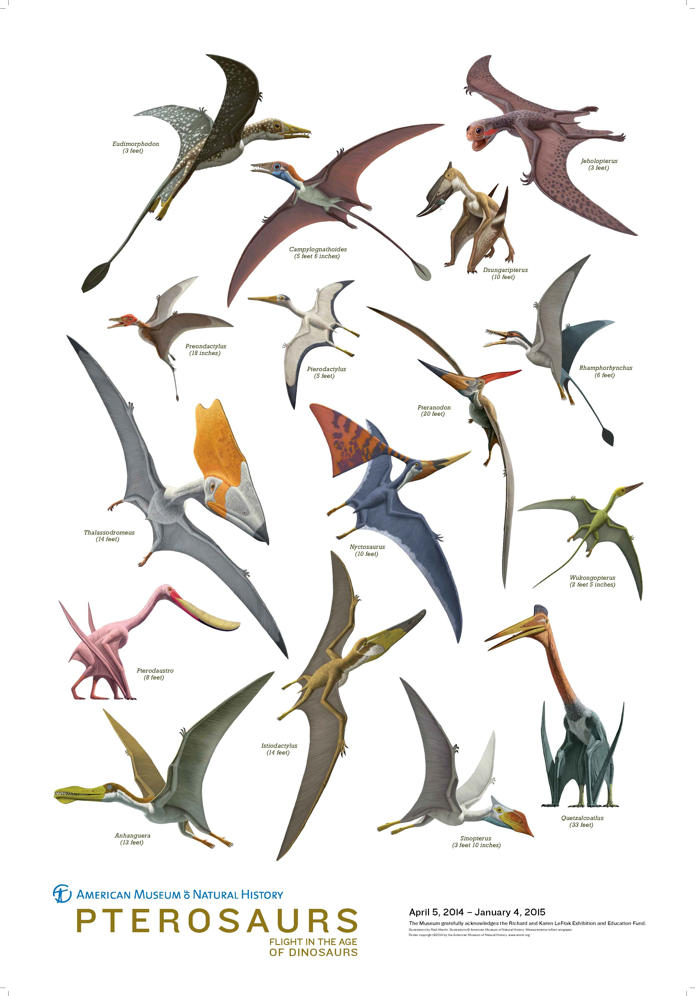 Pterosaurs poster