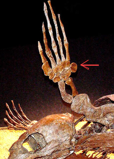 Cretaceous turtle <I>Protostega</I>