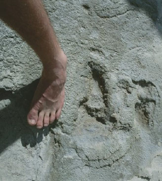 Langebaan footprints