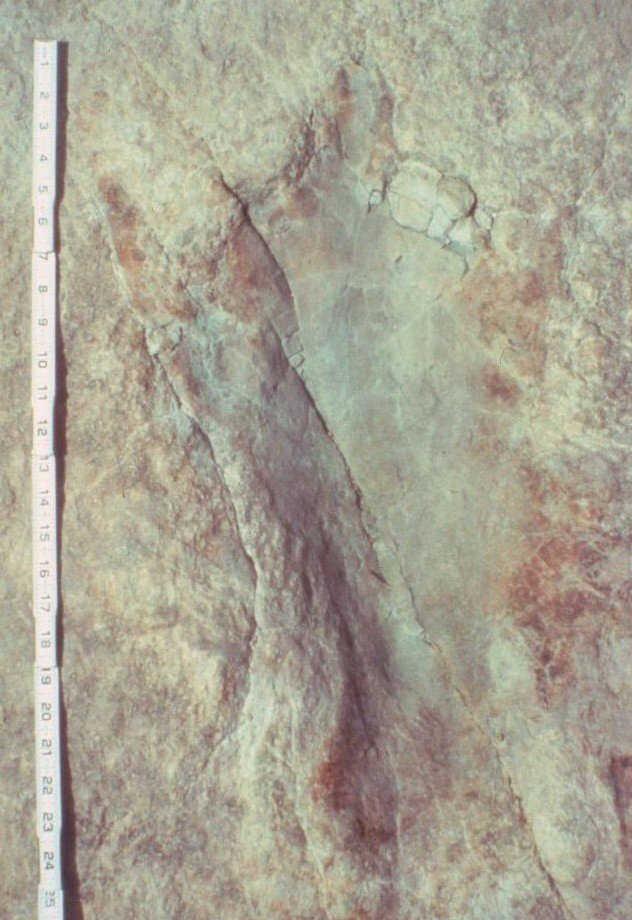 Taylor Trail track IIS,+4, 1985