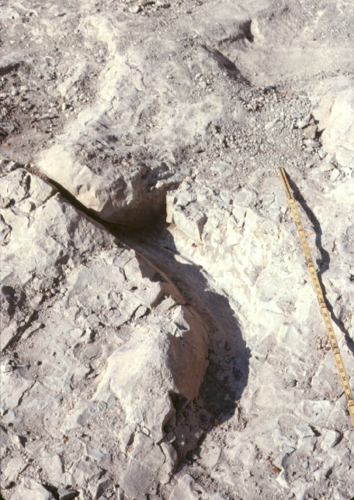 Possible Tail Mark 1, Main Site, DSVP 