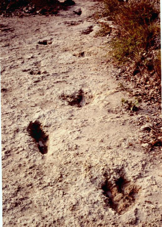 ornithopod trail