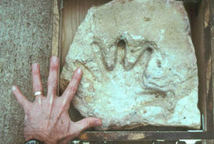 Alleged Human Hand Print