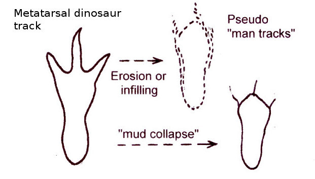 Relationship of metatarsal Dinosaur Tracks <BR> to 'man tracks'