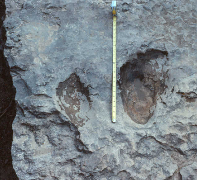 'Broadfoot' prints at State Park Shelf 