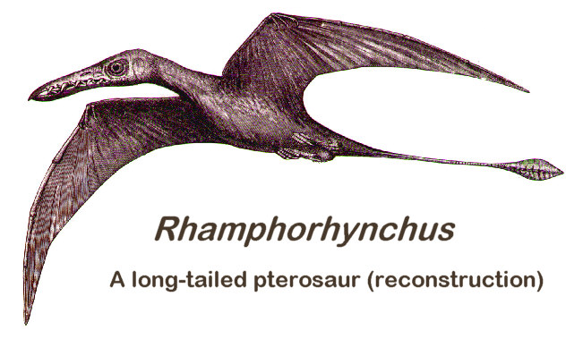 Figure 1. Rhamphorhynchus reconstruction