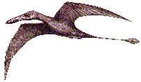 Living Pterosaurs?
