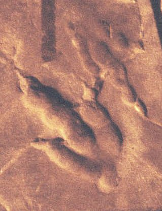 sauropod trail
