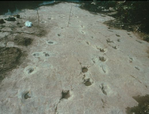 Taylor Site, 1984, Overhead photo
